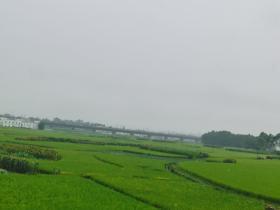 【康哥日记】第11篇:雨下一整天
